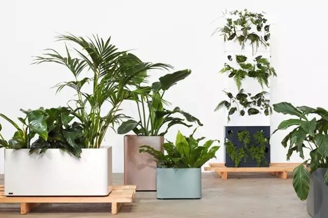 8种室内植物搭配,实用性家庭的创意