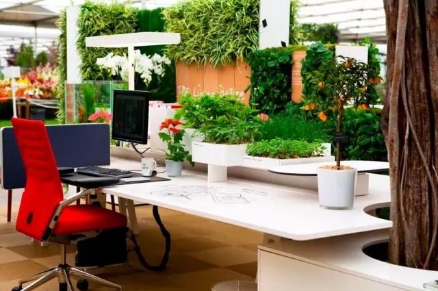办公室中适合养哪些花