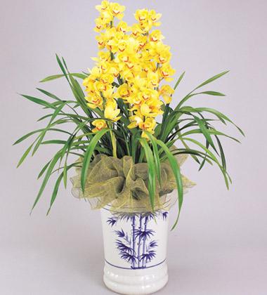 中国被称为什么国_春节送什么?春节送花的常识-中国鲜花礼品网