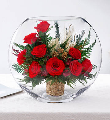 玫瑰花园/红
