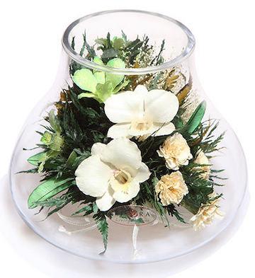 马蹄形兰花