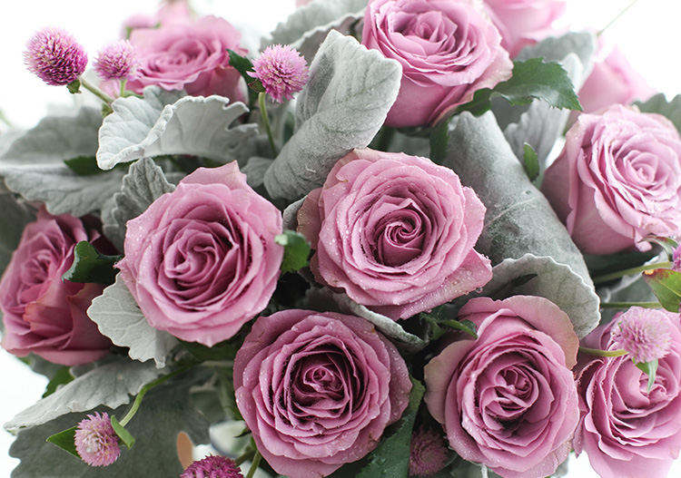 12朵紫玫瑰花语_紫情蜜语:紫霞仙子紫玫瑰20枝(如当地缺货可用冷美人紫玫瑰
