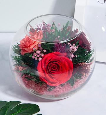 美丽无限/三色玫瑰